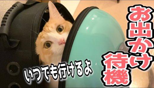 飼い主が出かける準備を始めると猫用キャリーに入る猫