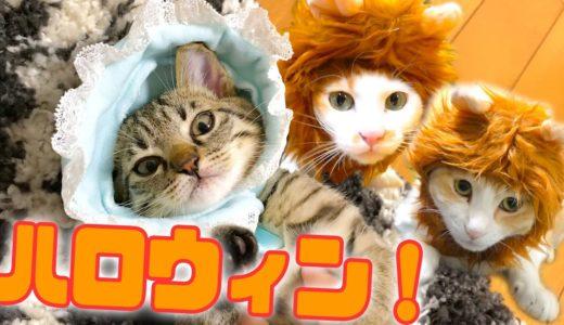 猫たちがハロウィン仮装で大変身!あまりの可愛すぎて悶絶…