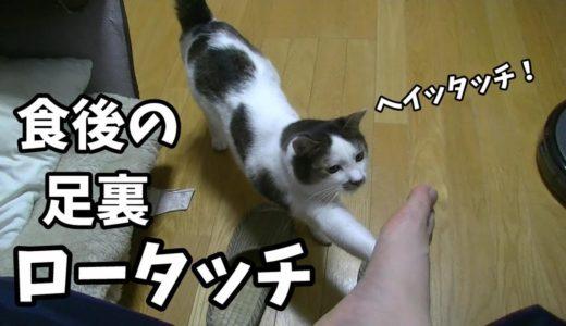 家の猫の食事を観察してみた