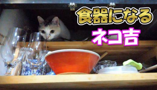 玄関で傘になり、キッチンで食器になる三毛猫