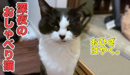 猫と深夜のおしゃべり、からのお膝タイム!
