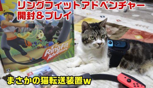 猫転送装置化!猫の居る前でリングフィットアドベンチャー開封するとこうなります☆【リキちゃんねる 猫動画】Cat video キジトラ猫との暮らし