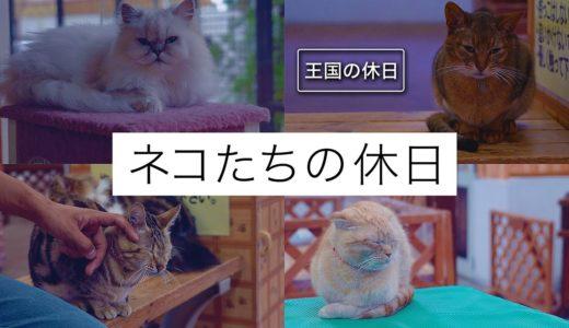 【王国の休日】ネコたちの休日@那須どうぶつ王国 NAK Holiday - Cats' Day Off