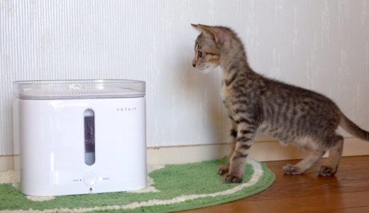 新入り子猫こぱん初めての猫部屋散策!