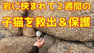 猫  岩に挟まれて2週間の子猫を救出&保護 Rescuing and protecting a kitten