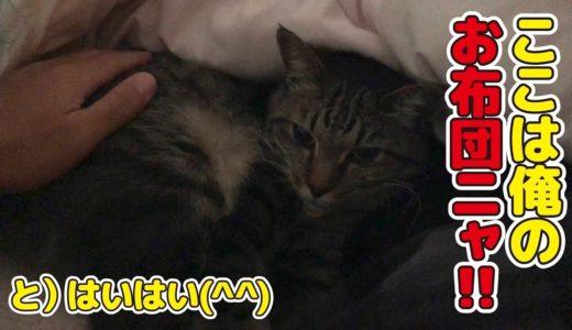 父の布団に我が物顔で寝る猫!