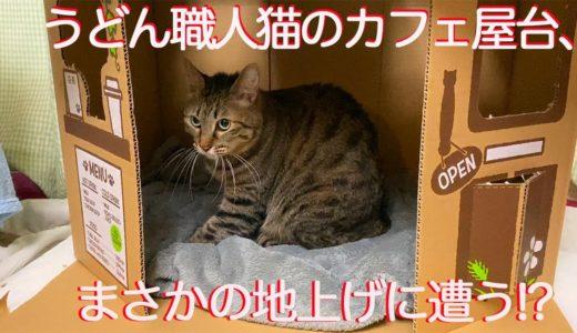 うどん職人猫、待望の隠れ家的うどんカフェ屋台を開店する The Udon cat Cafe