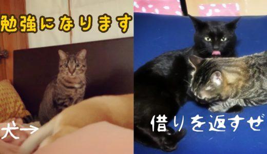 犬から学ぼうとする猫と日頃の借りを返す猫  Cat mimicking dog