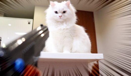猫が悪さをするので水鉄砲で水責めした結果...笑