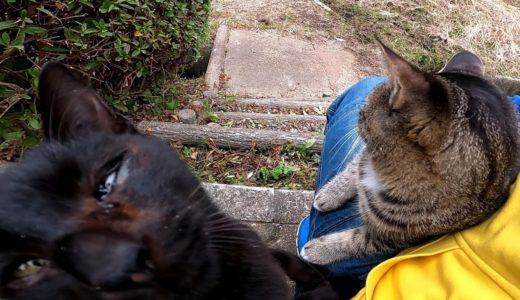 黒猫がいたのでナデナデしていたら他の猫が駆け込んで来て膝の上に乗ってきた