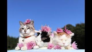 もってのほかをのせた3匹の猫 191111
