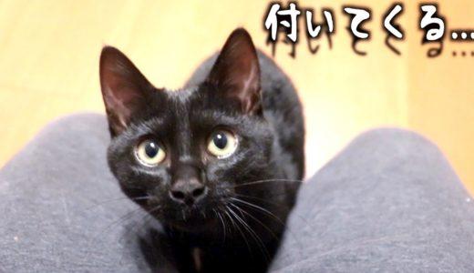 保護した野良猫がどこまでも人に着いてくるストーカー猫だった。。