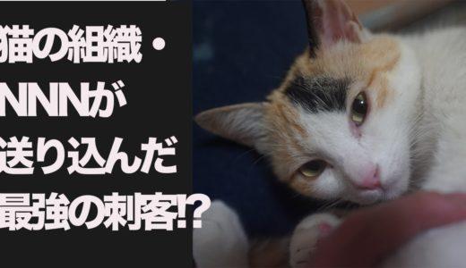 猫の秘密組織NNN、我が家に最強の刺客を送り込むThe rare cat from the cabal of the cats