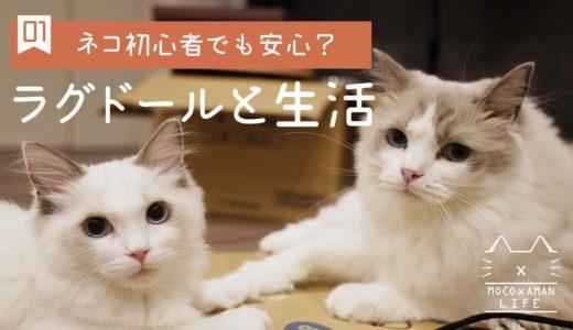 【vlog #01】ネコ初心者でも一緒に暮らしやすい?ラグドールと生活