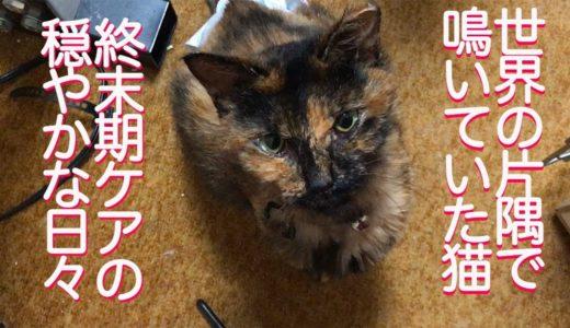 世界の片隅で鳴いていた保護猫、終末期ケアを開始する The old recued cat with CKD was living in my arm