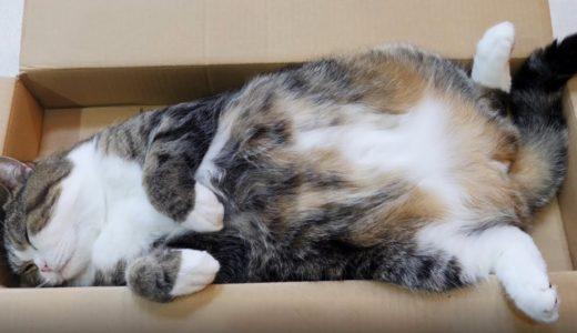 ジャストサイズの箱で寛ぐねこ。-Maru relaxes in the completely fitted box.-