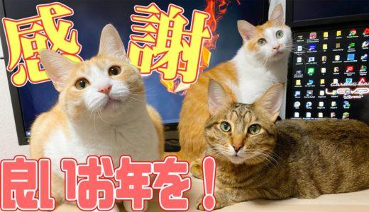 猫たちと病気と闘い乗り越えた1年を振り返る&ご報告