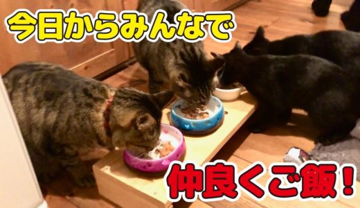 【朗報】ソフトケージを撤去して今日から完全に猫たち同じ空間で過ごします!