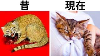 ネコの自己家畜化計画