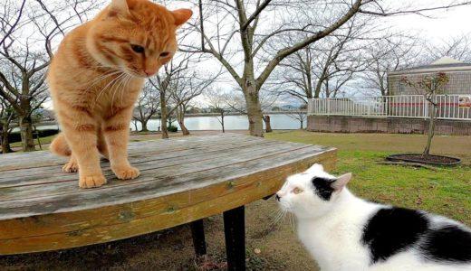 この猫達何か会話してるの?と思ったら喧嘩に発展