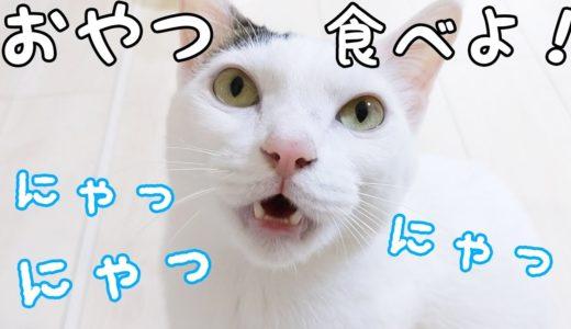おやつが欲しくてたくさんお喋りする猫