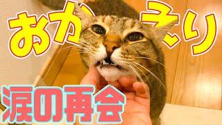 【お出迎え】4日ぶりに帰ってきた飼い主に泣きながら抱きつく猫たち