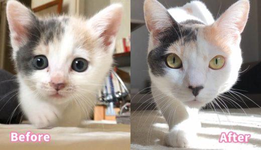 子猫から成猫へ・ぽてとの可愛いじわじわシーン集