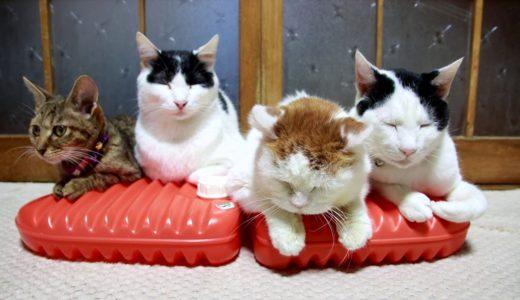 湯たんぽの上の猫 200124