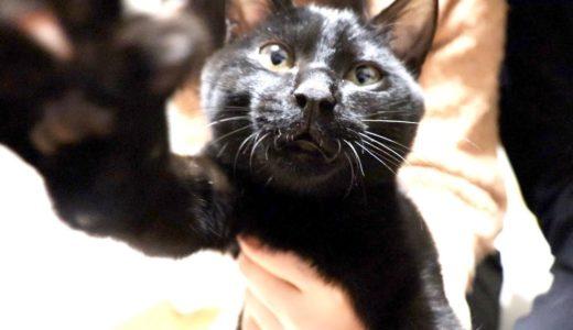 保護した野良猫の爪を切ったら震え出しました…