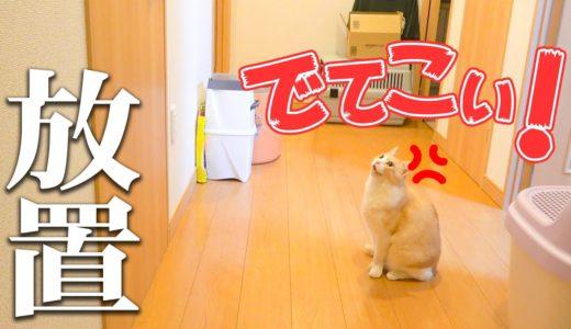 ご飯が欲しい猫たちを放置してトイレに行った結果wwww
