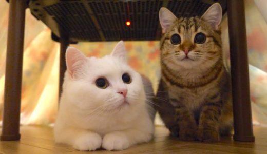 猫用こたつの居心地が良すぎて全員集合しました!