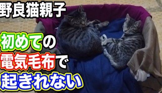 野良猫 家猫化 電気毛布 【野良猫親子に初めて電気毛布をプレゼントしたら起きれなくなった!】 Kitten Cat Warm blanket Japanese traditional house
