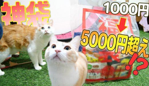 【神袋】猫の激安福袋がまさかの大当たりだったwww