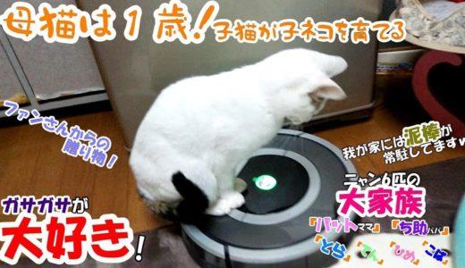 【母猫は1歳】子猫が子ネコを育てる! #51 ファンさんからの贈り物!開封する時は大騒ぎww