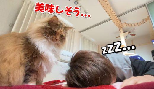 至近距離で観察する猫がこちら。