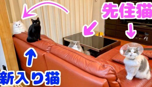 保護した子猫を先住猫たちがいる部屋に初めて入れてみたら…