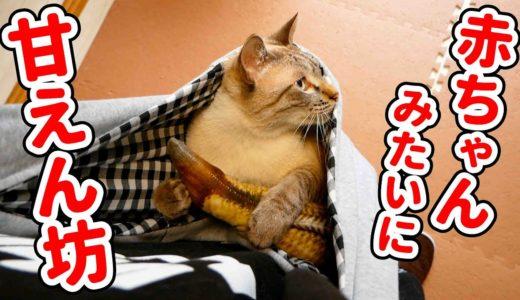 抱っこが好きすぎる猫のために抱っこ紐でもスヤスヤ寝てもらう方法を考えました
