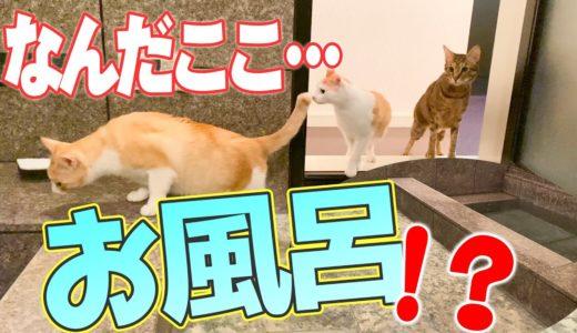 新居のお風呂が面白すぎて猫たちが大困惑な件www