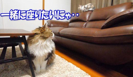 ネコ吉と一緒にソファーに座りたい巨猫のボス吉
