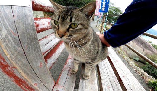山の上のベンチに猫が座っていたので隣に座ったら別の猫もやって来た