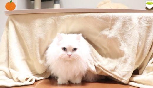 こたつで温まる猫が可愛い