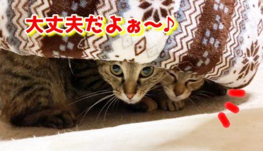 猫が危ないと思うとすぐ助けにいく柴犬 Shiba Inu is a cat's mother