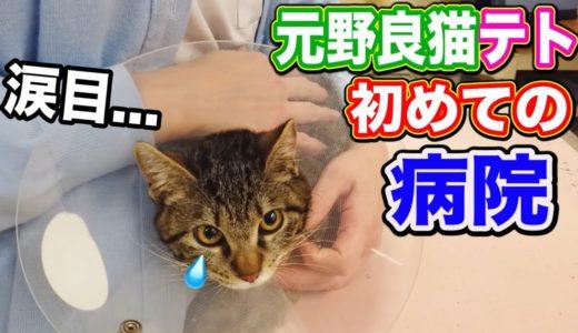 元野良猫 子猫 病院 家猫化 【元野良猫テトちゃん初めての病院で涙目!】 Kitten Cat