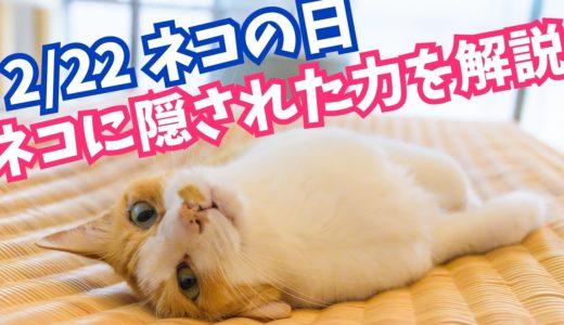 【人間の心を操る】ネコの持つ力について
