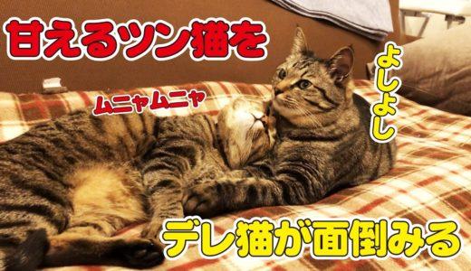 ラブラブな所を見せつける猫に誰も付け入る隙が…!?
