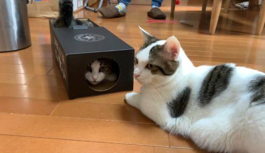 スマートに開ける猫とガサゴソする猫がかわいい