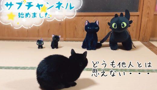 クールに見えて関心を隠しきれない猫 Who are these guys?