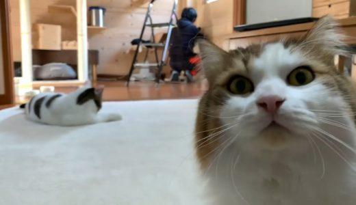作業するお父さんの後ろでほのぼのする猫たち 【今日のひのき猫】