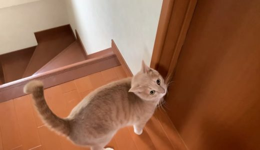 隣の部屋へ呼びに来る猫