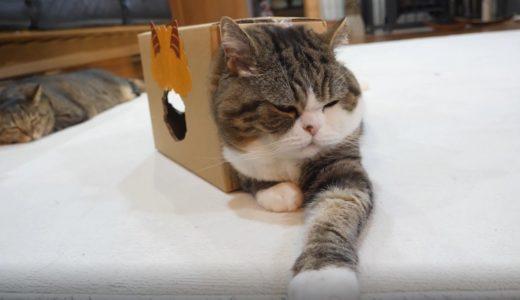 たぶん、箱の中で寛いでいるねこ2。-Probably Maru is relaxed in the box 2.-